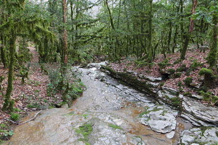 streamlet: Krasnodar region, Russia. Sochi National Park in Western Caucasus, near the city of Sochi. Scenic overgrown with moss colchis forest and small stream