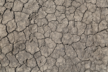 parched: Parched and cracked soil