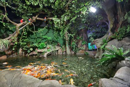 overt: SOCHI, ADLER, RUSSIA - MAR 12, 2014: Sochi Discovery World Aquarium - one of the main attractions of Adler, the largest aquarium in Russia. The Koi carpio fish (Cyprinus carpio haematopterus) in an overt pond