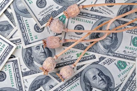 drug trafficking: Dry poppy heads lie on dollar bills. The concept of drug trafficking