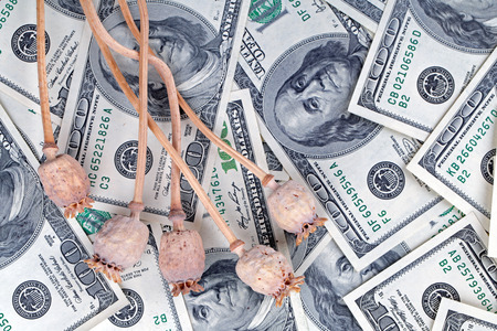 drug trafficking: Dry poppy heads lie on dollar bills. The concept of drug trafficking