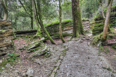 biosphere: The Maze - tectonic fault formed 20 million years ago, popular mountain tourist route in Yew-tree grove in Caucasian biosphere reserve, Khosta district of Sochi, Krasnodar Krai of Russia