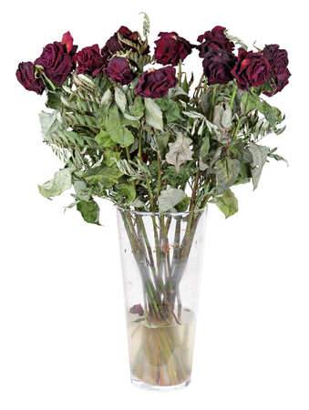 A glass vase with the dead bouquet of roses, isolated on white background