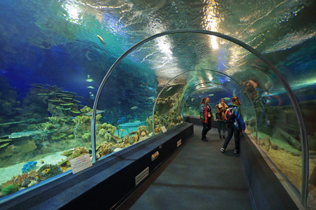 krasnodar region: SOCHI, ADLER, RUSSIA - MAR 12, 2014: Sochi Discovery World Aquarium - one of the main attractions of Adler, the largest aquarium in Russia