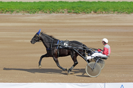 MOSCOW, RUSSIA - MAY 08, 2016: Central Moscow Hippodrome, 182 the opening race of the season. Tests of trotters breeds horses (harness racing)