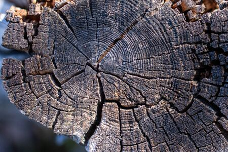 Natural wood texture. Old tree trunk with different textures Stok Fotoğraf - 147588173