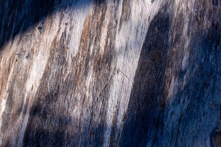 Birch tree stem background with bark. Light and shadows, silhouette of leaves Natural wood texture. 写真素材