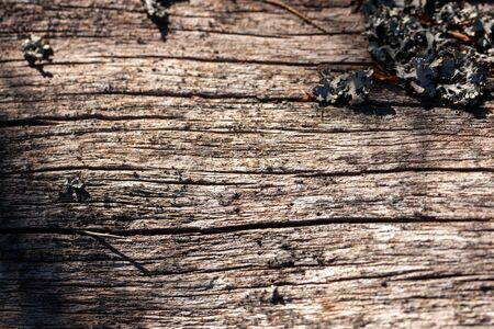 Natural wood texture. Old tree trunk with different textures