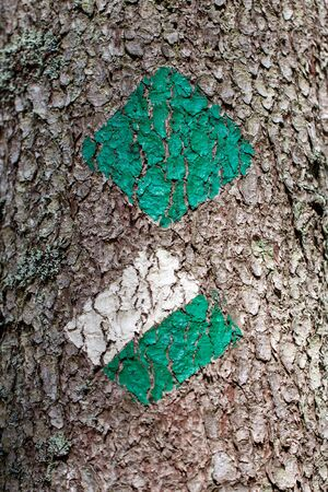 Green and white trail marker painted on a tree for hikers and tourists on a hiking trail - close up