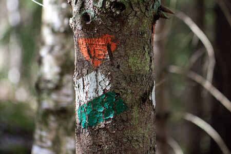 Close-up of green, white and orange white trail markers painted on a tree for hikers and tourists on a hiking trail 写真素材