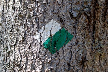 Close-up of a green and white trail marker painted on a tree for hikers and tourists on a hiking trail