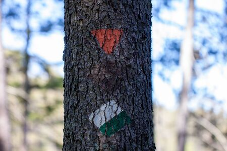 Close-up of green, white and orange trail markers painted on a tree for hikers and tourists on a hiking trail