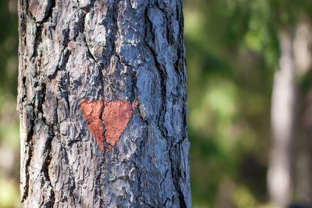 Close-up of orange trail marker painted on a tree for hikers and tourists on a hiking trail