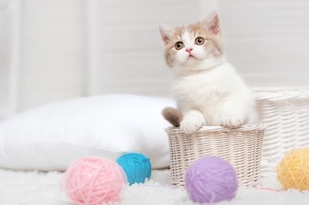 흰색 바구니에 작은 새끼 고양이 스톡 콘텐츠