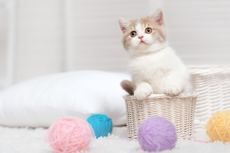 Small kitten in a white basket