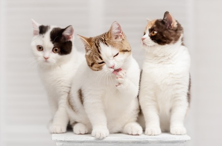 washup: Three kittens on the shelf in the interior Stock Photo