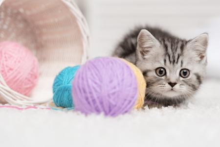 내부에 원사의 바구니 공 옆에 앉아 회색 줄무늬 고양이 스톡 콘텐츠