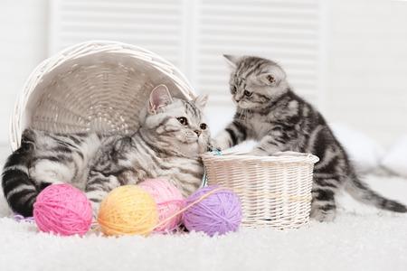 간 원사의 공 바구니에 고양이 두 마리 스톡 콘텐츠
