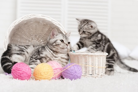 Two cats in baskets with balls of yarn  in the interior