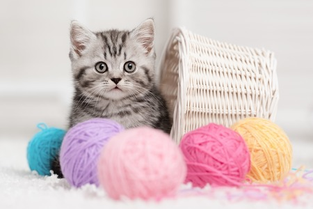 kitten small white: Gray striped kitten sitting next to a basket ball of yarn in the interior