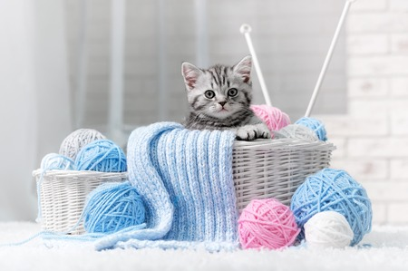 Gray striped kitten sitting next to a basket ball of yarn in the interior