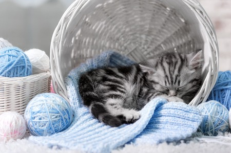 Gray tabby kitten sleeps in a basket with balls of yarn