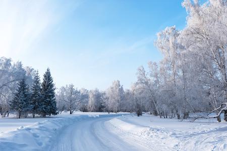 winter: Trees in hoarfrost in winter sunny day