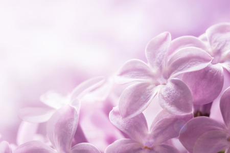 delicate: Delicate lilac flowers close-up Stock Photo