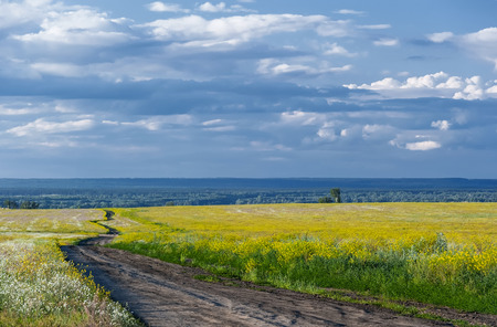 Countryside landscape  Flowering meadow and the road in a field in summer cloudy day