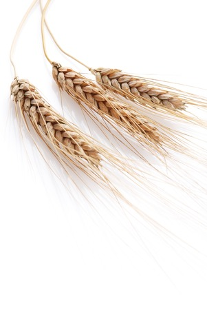 Wheat on a white background photo