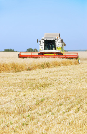 mows: The combine mows wheat in a field