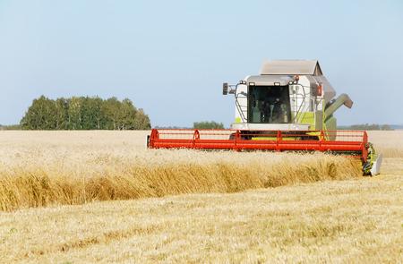 cosechadora: La cosechadora de trigo siega en un campo