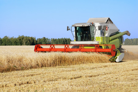 mows: The combine mows wheat in a field