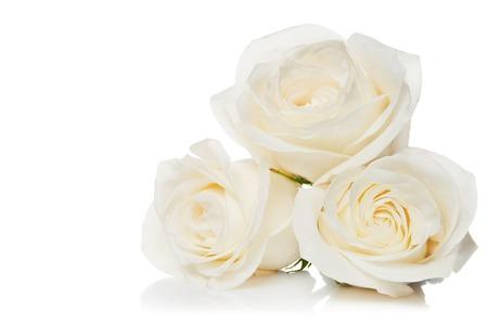 白い背景に白いバラの花束 写真素材
