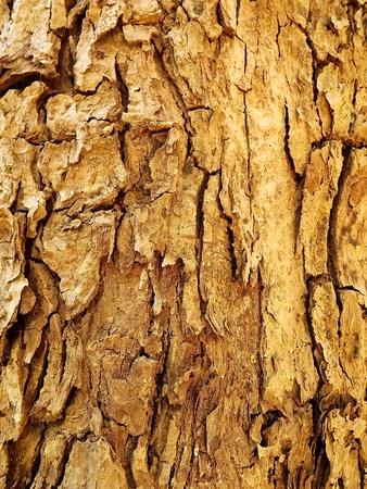 Greatwood  pattern photo