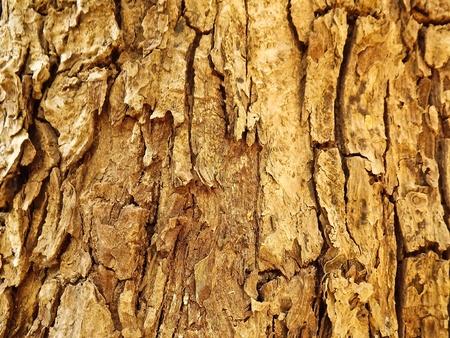 Wood  pattern photo