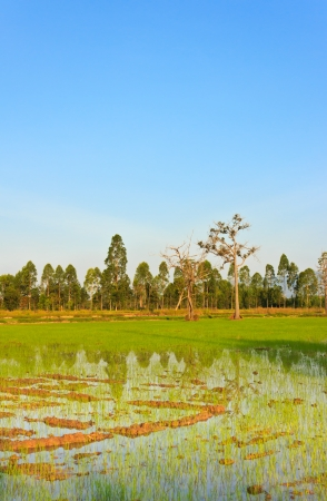 field before sow the seeds,Thailand photo