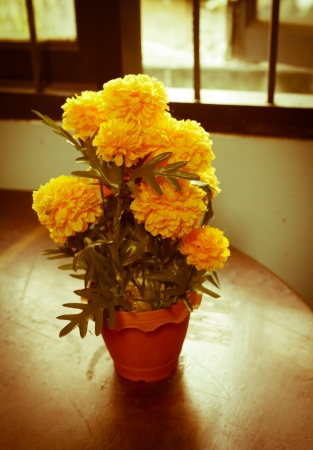 vintage marigold flower in the home photo