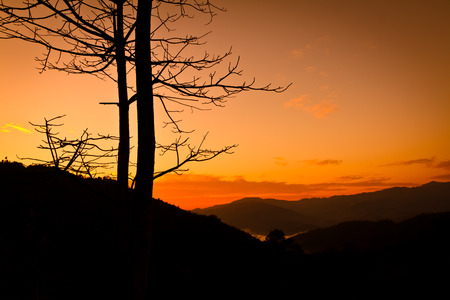 clody sky: silhouette tree before sunrise on high mountain,Chiangrai