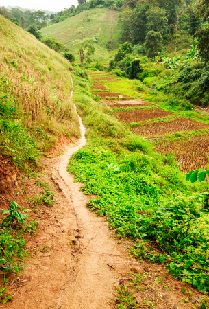 muddy tracks: way in countryside,chiangrai,north of Thailand