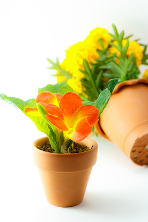 orange and yellow flower with white background photo