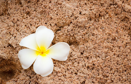 white plumeria on soft sand photo