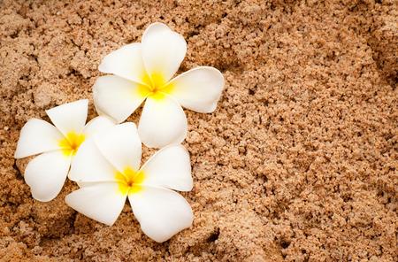 white plumeria on soft sand photo