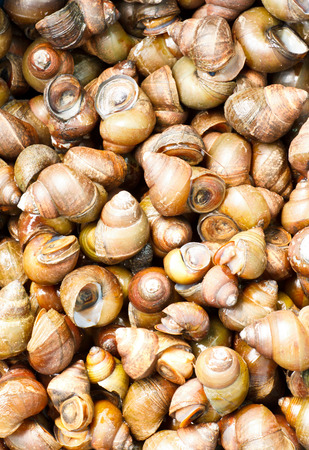 mollusk: mollusk