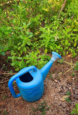 watering pot: blue watering pot in garden Stock Photo