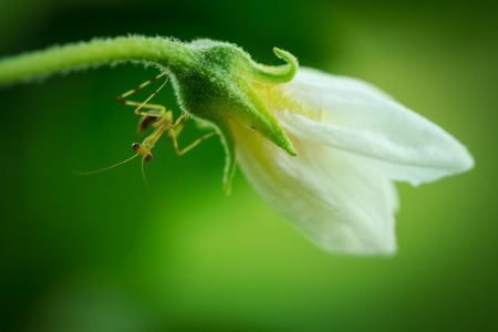 young mantis on small flower photo