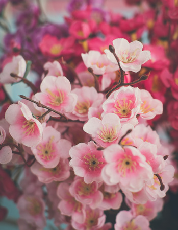 chamomile flower: pink sakura flower for decoration with vintage tone Stock Photo