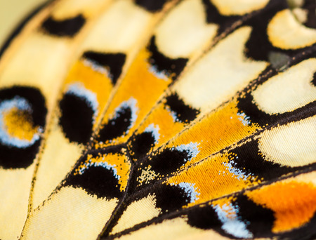 butterfly garden: colorful texture on butterfly wing
