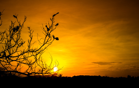 silhouette tree with twilight sunset Stock Photo