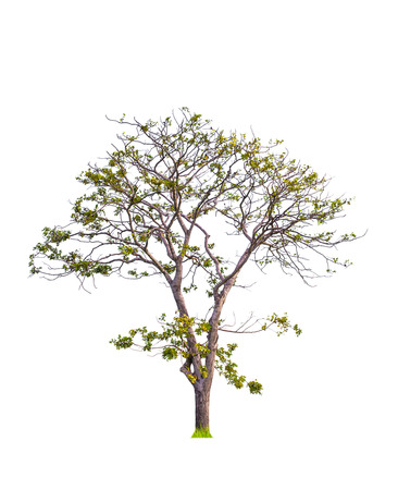 tropical tree: tropical tree on isolated background